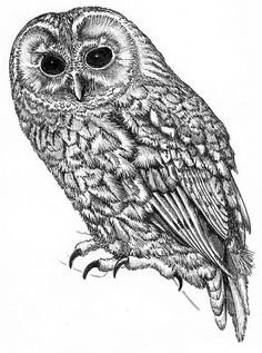 owl by Muddy Funkster
