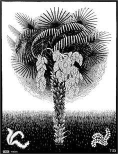 Palm Tree - Мауриц Корнелис Эшер