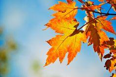 Beautiful fall day in Colorado 10/2015