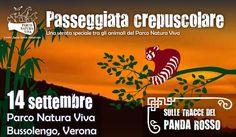 Parco Natura Viva: passeggiata crepuscolare alla Scoperta del Panda Rosso #NewsGC