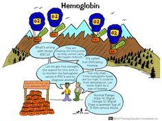 Nursing Mnemonics and Tips: Hemoglobin Nursing Lab Values, Nursing Study Tips, Nursing Labs, Nursing Board, Nursing School Tips, Nursing Notes, Nursing Schools, Pediatric Nursing, Bsn Nursing