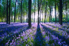 Micheldever Forest, Hampshire, England 21 Surreal Places In The UK To Add To Your Bucket List Oh The Places You'll Go, Places To Visit, England And Scotland, English Countryside, Gras, Adventure Is Out There, Beautiful Landscapes, Surrealism, Beautiful Places