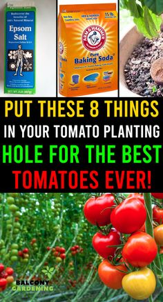 Home Vegetable Garden, Tomato Garden, Tomato Plants, Garden Yard Ideas, Lawn And Garden, Small Gardens, Outdoor Gardens, Edible Garden, Edible Plants