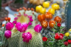 Cactus Punk II  Please leave us your comments, reviews and share. All work is our ORIGINAL   To purchase HD photos and our full range of complimentary décor products & print/canvas/framing & specialised product options visit our website www.bellavistaphotography.com.au or send us a message on fb. We deliver to most countries. To licence for commercial use visit https://prime.500px.com/eyeofbeholder