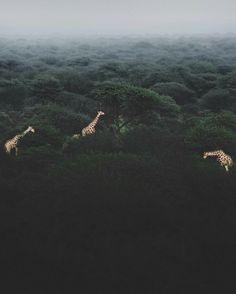 África 🌍