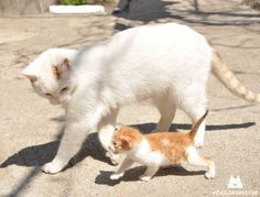"""""""Did is how the big cats stroll, son, just follows me..."""""""