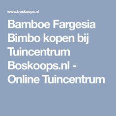 Bamboe Fargesia Bimbo kopen bij Tuincentrum Boskoops.nl - Online Tuincentrum