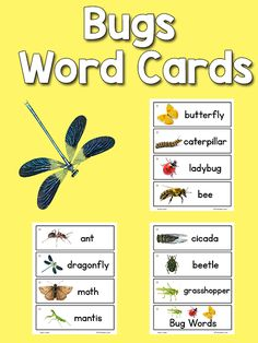Printable picture-word cards for your Writing Center, Picture Dictionaries, or Word Wall. Preschool Word Walls, Preschool Bug Theme, Preschool Literacy, Preschool Lessons, Preschool Pictures, Kindergarten Units, Montessori Elementary, Preschool Activities, Insect Crafts