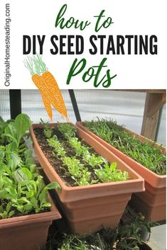 HOW TO DIY SEED STARTING POTS.learn at least different ways to begin your seeds indoors to get a jump on your growing season! Starting seeds indoors is great fun with big savings! Organic Vegetables, Growing Vegetables, Growing Tomatoes, Garden Drawing, Organic Gardening Tips, Vegetable Gardening, Veggie Gardens, Gardening Direct, Growing Seeds
