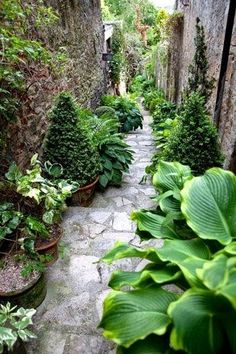 Enchanting garden walkway.. has lots of beautiful hostas within the landscaping