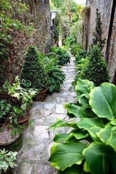 Enchanting garden walkway.. has lots of beautiful hostas within the landscaping