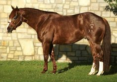 Pedigree for Hottish, photos and offspring from the All Breed Horse Pedigree Database. Two Horses, Horses And Dogs, Animals And Pets, All The Pretty Horses, Beautiful Horses, American Quarter Horse, Quarter Horses, Cutting Horses, Into The West