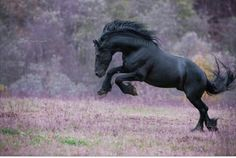 I love how much fun this horse is having! :D
