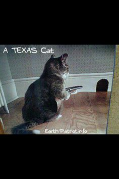 Texas, bring it on  hahaha I love this funny hahaha, If i had a cat this would be mine for sure ;)