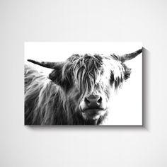 black and white scottish highland cow wall art print