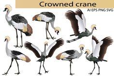 Crowned crane #animal #bird #collection #feathery #vector #ornithology #zoology #zoo #wildlife #crane