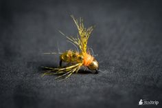 Early season nymph, tied on Tunca Expert hooks.  Tying & Photography : Mathias Briquemont