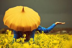 Here's our Mellow yellow photo gallery including pictures of luscious decor, fashion shoes, accessories and nature. Yellow Umbrella, Umbrella Art, Under My Umbrella, Pagoda Umbrella, Vintage Umbrella, Umbrella Photography, Color Photography, Photography Gallery, Mellow Yellow
