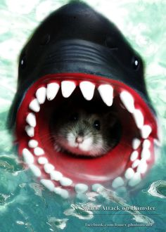 Russian Dwarf Hamster in sharks mouth!!  :0)