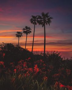 Dreamlike Landscapes of San Diego by Alec Basanec #inspiration #photography