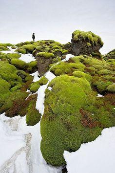 Mossy Rocks, #Iceland