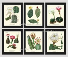 Botanical Print Set of 6 Antique Beautiful Cactus Plant Blooming White Pink Yellow Flowers Tropical Desert Garden Nature Home Room Decor Wall Art Unframed. Beautiful set of 6 prints based on antique botanical illustrations from 1823. Wonderful details, colors and natural history feel. • The prints measure 4x6, 5x7, or 8 x 10 inch. based on your selection come with a white border for easy framing. • Printed on professional artist archival matte paper. • The prints are part of Amazon…