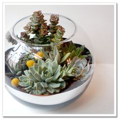 Image detail for -So Sweet Succulents « Urban Scarlet