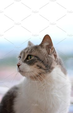 cat sitting Photos cat sitting on the edge of a terrace looking at the landscape by expressiovisual