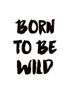 Juliste tekstillä Born to be wild mustavalkoisena, taulut netistä