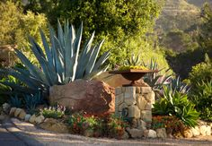 Landscaping. Dry Conditions Using Gravel, Succulents: California: Grace Design Associates Inc.