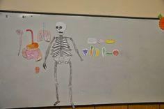 Хвърчащата класна стая: Човешко тяло