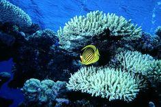 Sicher Tauchen! Bleib in Kontakt, vermeide Tauchunfälle! Sea State, Diving, Safety