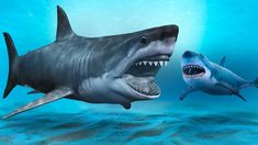 A Shark Scarier Than the Megalodon Could Exist Bizarre Animals, Prehistoric Animals, The Great White, Great White Shark, Scary Ocean, Cat Shark, Gulf Of California, Shark Facts, Species Of Sharks