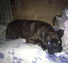 Rocco robador de cama.