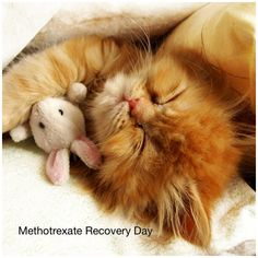 Methotrexate recovery day