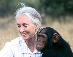 Jane Goodall - one of my heros