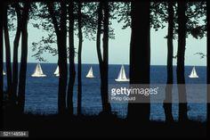 Racing sailboats are visible through silhouetted tree trunks. |... #kerteminde: Racing sailboats are visible through… #kerteminde