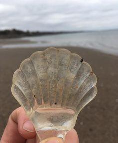 Sea glass scallop shell