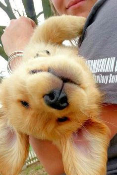 And when this little girl forgot which way to take a selfie. | 23 Times Golden Retriever Puppies Were Huge Dweebs #GoldenRetrieverPuppy