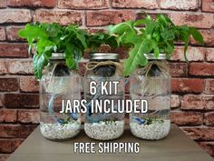 3 Mason Jar Aquaponics Kit Build Your Own Hydroponics Herb Hydroponic Growing, Hydroponic Gardening, Organic Gardening, Aquaponics Plants, Vegetable Gardening, Gardening Tips, Indoor Gardening, Backyard Aquaponics, Aquaponics System