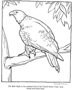 bald eagle coloring page zoo animals - Bald Eagle Coloring Page