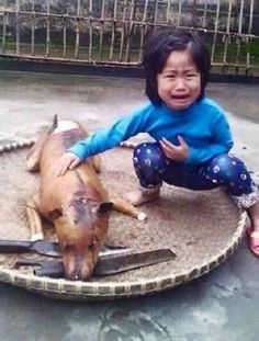 Vietnam: Child Grieves over Pet Dog Slaughtered - The photo is heart-breaking ! Taken in Vietnam, it shows a child grieving over a former pet. Sadly, this story is not new . Cane Corso, Chinchilla, Pet Dogs, Dog Cat, Vietnam, Stop Animal Cruelty, Save Animals, Find Pets, Sphynx