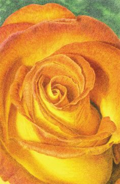 In this instruction-packed article, learn how to draw a beautiful rose with colored pencils, amongst other helpful hints for making art with colored pencils.