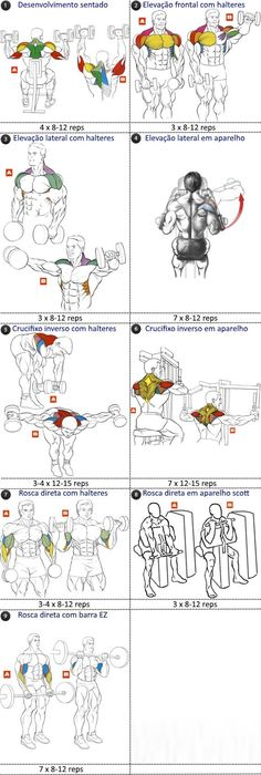 Deltoid and Biceps Training Program programa treino deltoides e bíceps Deltoid and Biceps Training Program Fitness Workouts, 7 Workout, Workout Plans, Deltoid Workout, Bodybuilding Training, Bodybuilding Workouts, Muscle Fitness, Mens Fitness, Health Fitness