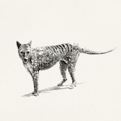 Thylacine I Limited Edition Giclée Print
