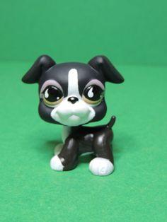 #826 chien dog black & white boxer Brown eyes LPS Littlest Pet Shop Figurine