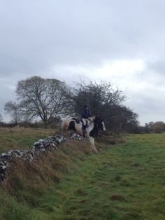 Jackson, a bombproof young cob out hunting with the Grallagh Harriers.  Video:http://youtu.be/fbE0Nb6Z9Uc