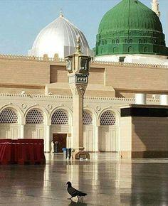 Milad un Nabi Mubarak Masjid Haram, Al Masjid An Nabawi, Islamic Images, Islamic Pictures, Islam Muslim, Islam Quran, Muslim Pray, Mecca Madinah, Medina Mosque