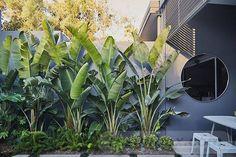 A courtyard garden haven 😌. A courtyard garden haven 😌. Tropical Backyard Landscaping, Tropical Garden Design, Backyard Garden Design, Landscaping Ideas, House Landscape, Landscape Design, California Backyard, Exterior, Outdoor Gardens