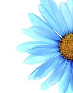 Color Me Blue (Rebecca Cozart)